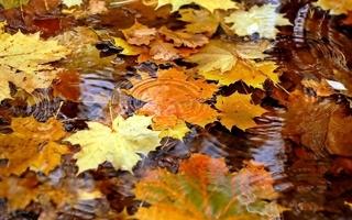 Jak si užít podzim